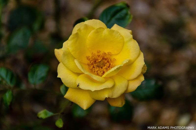 Last Yellow
