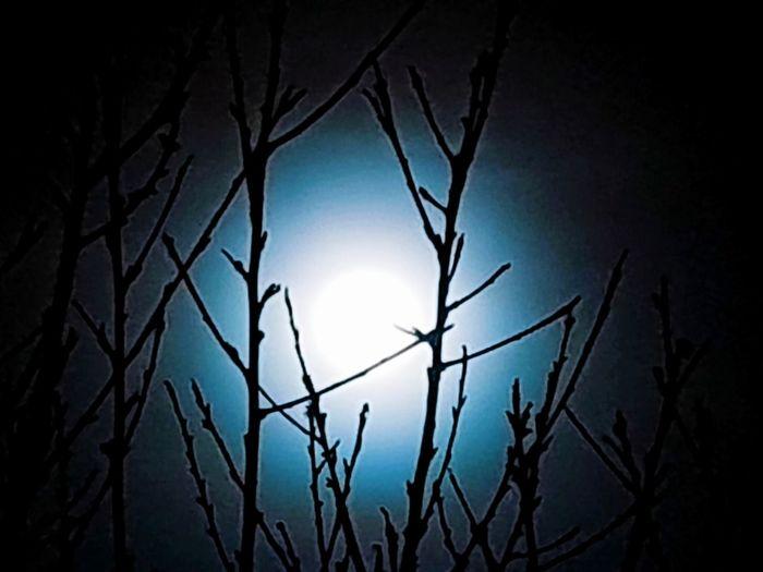 Moonlight Nightlight Trees EyeEm Nature Lover EyeEmNewHere Eyeemmarket Space Silhouette Moon Dark Illuminated Sky Full Moon Moonlight Planetary Moon Half Moon Star - Space