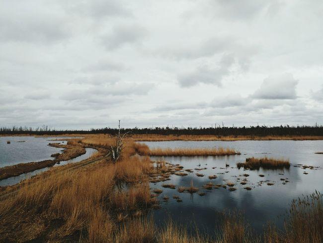 Water Nature Rural Scene Wetland Landscape No People Outdoors Mud Sky Marsh Wood