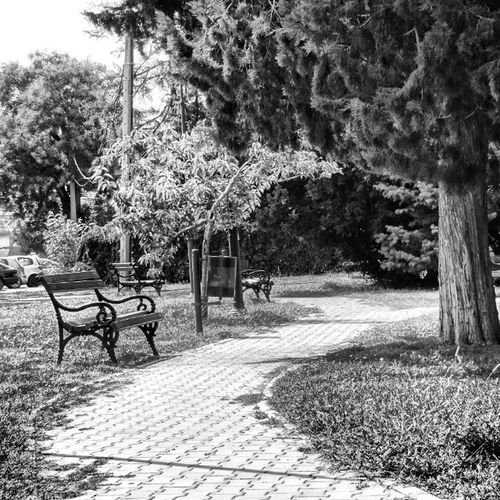 Kovin, Serbia Serbia Ig_serbia Serbia Instagramserbia Banat  Vojvodina Europe Beauty Blackandwhite Art Artistic Park Sony Cybershot Nature Grey Black White Cool Amazing Follow Street Enjoy Trees Balkans