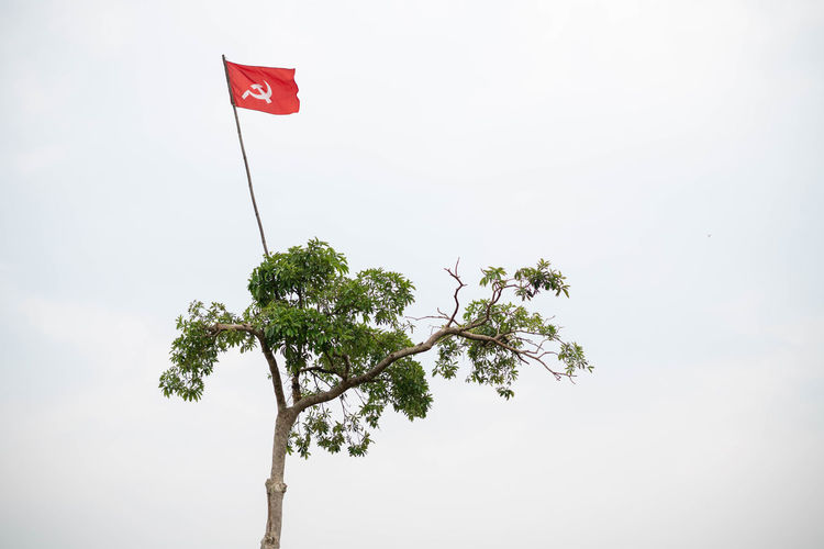 CPIM Communist Part of India Flag on a Green Tree in Kerala, India Tree Flag Plant Sky Nature Day Patriotism Low Angle View No People Beauty In Nature Growth Red Tranquility Copy Space Outdoors Environment Green Color Wind Scenics - Nature Cpim Communist Party India Kerala Ijas Muhammed Photography Revolutionary