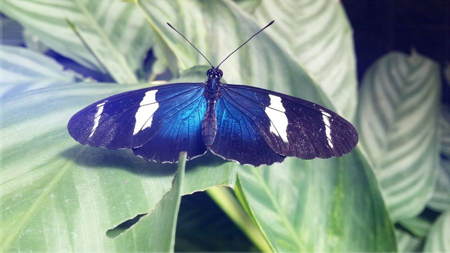 Butterfly ?