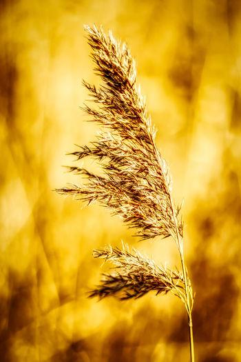 Plant Crop