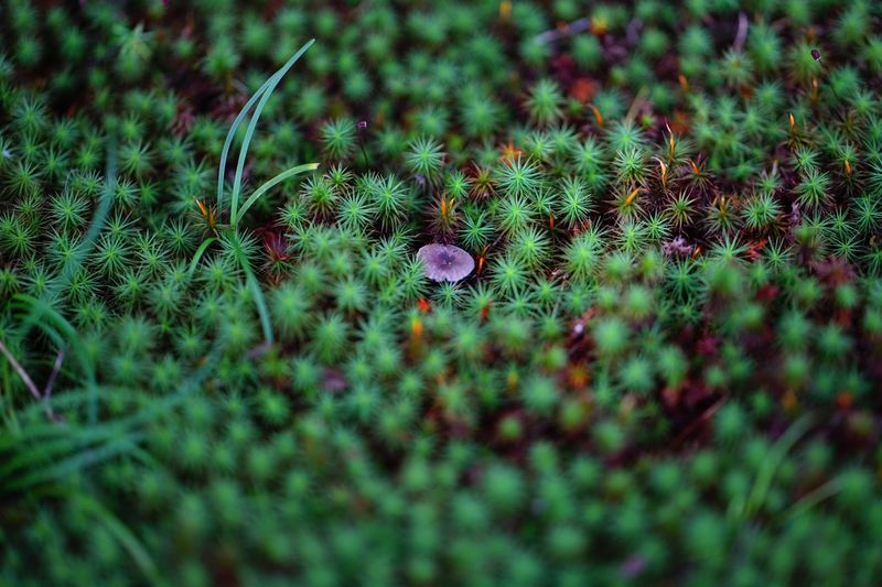 Capture The Moment Beauty In Nature Growth Green Color Grass Mushrooms Toadstool Selective Focus Nature Fragility Tranquility Landscapes TakeoverContrast Fine Art Minimalism Grassy Abstract Surface Level Still Life Tranquil Scene Zeiss Batis EyeEm Nature Lover EyeEm Best Shots 16_10