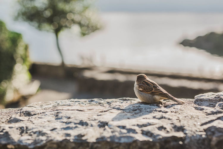 Random bird sitting on Chillon Castle. Relaxing Business Nature Animal Bird Sunlight Day Outdoors Rock Switzerland Close-up Solid Castel No People Bird Photography Animals In The Wild Rock - Object Animal Themes One Animal Focus On Foreground Animal Wildlife Vertebrate