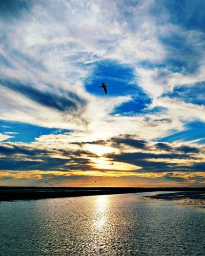Flying Sunset Sea Bird Sky Water Animal Themes Reflection One Animal Nature Silhouette Beauty In Nature Beach Cloud - Sky Outdoors Dramatic Sky Swimming No People Animals In The Wild Scenics Camarones Mexico Camaron Working Camaronera My Passion ❤