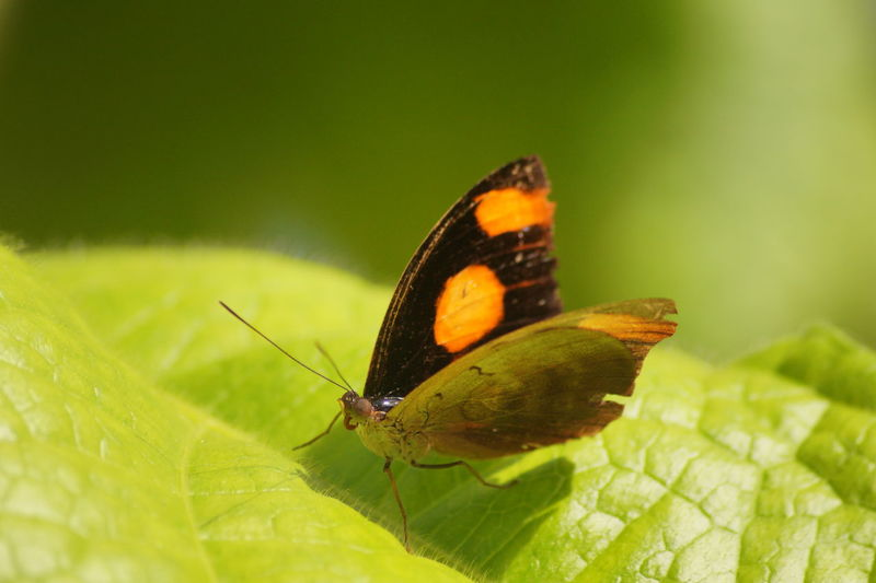 Animal Antenna Animals In The Wild Butterfly - Insect Focus On Foreground Green Color Leaf One Animal Outdoors