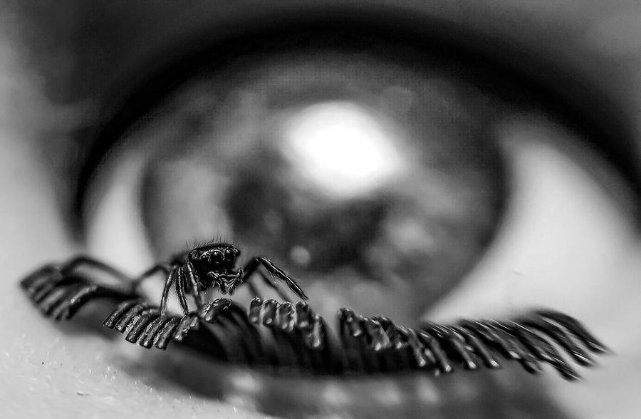 Jeepers creepers Attack Of The Macro Collection! Insect Paparazzi Macro Addict In The Eyes Of A Spider Spider Eyes Spider Portrait Macro Photography Arachnophobia Macro_collection Eyes Spiderland Bug Portrait Spider Macro Spiderworld Eye Jumping Spider EyeEm Macro Fresh on Market 2016 Spiderama