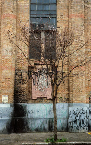 Tree Analog Filmisnotdead Colors City Urban City Street Art Graffiti Architecture Building Exterior Built Structure Sky