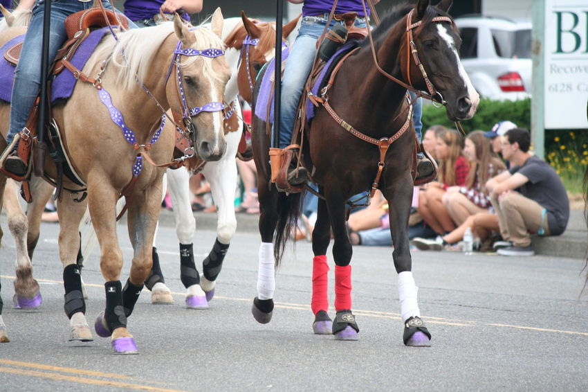4th Of July 2016 4th Of July Parade Bridle Casual Clothing Celebration City Life Day Focus On Foreground Horses Lifestyles Livestock Mammal Outdoors Parade