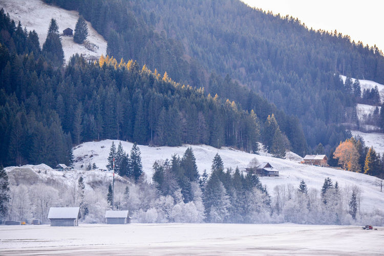 Beauty In Nature Cold Temperature Gstaad Landscape Nature No People Outdoors Saanen Snow Switzerland Switzerland Alps Switzerlandpictures Tranquility Tree Winter Winter Winter Landscape Winter Trees Winter_collection Winterscapes Wintertime
