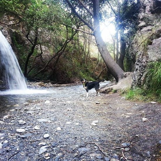 Mountain Nature Forest Water Dog River Dogs Sport Camera Dogslife Dogslover Dogslovers