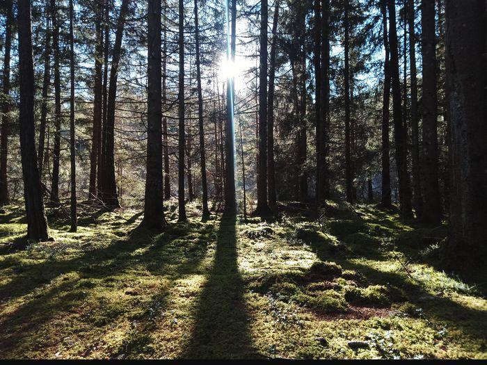 Oetztal Landscape Sky Woods Sunrays Greenery Vegetation