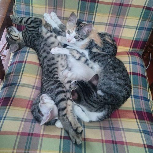 Und Kuschelklumpen zu viert. Blanco_the_cat Echo_the_cat Rayado_the_cat Felicidad_the_cat