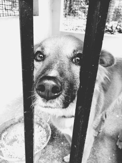 This guy looked so sad... Caged Dogs Dogslife Shades Of Grey Be Free Perspectives IPhoneography Check This Out Man Vs Nature Eye4black&white