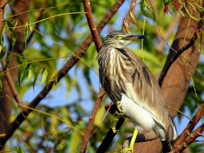 Green Heron Animal Themes Animal Wildlife Animals In The Wild Beauty In Nature Bird Focus On Foreground Nature No People Tree Woodpecker