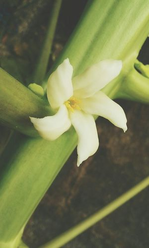 Meus Flor Natureza ♡
