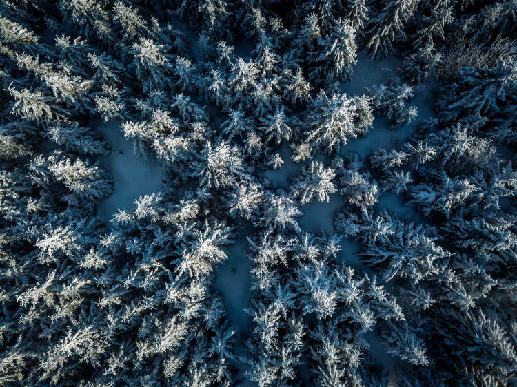 Czech Republic Winter Birdsview Countryside Flying Fromwhereidrone Jested Liberec Snow Trees From Above