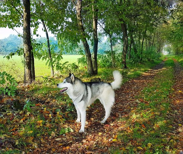 Dogs Husky Animals In The Wild Colours Of Autumn My Dog waiting game Pet Portraits