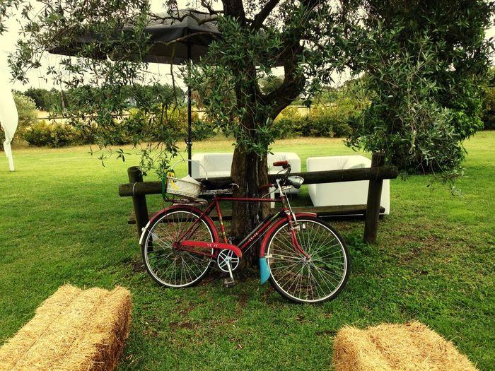 Secret Garden Bicycle Countryside