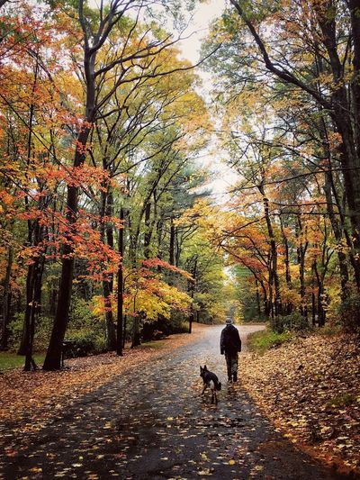 IPS2015Fall IPS2015Fall IPhoneography IPS2016Nature Autumn Autumn Colors Autumn Leaves Walking Man With A Dog Man Dog Outdoors IPS2016People
