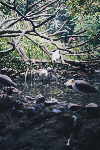 Birds perching on rock in forest