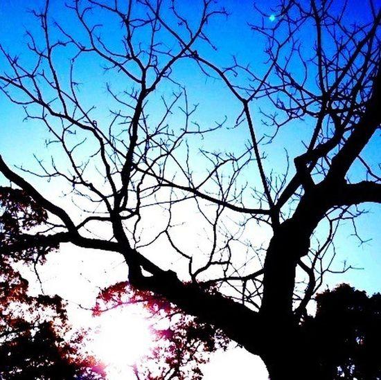 Sky Blue Magical Trees