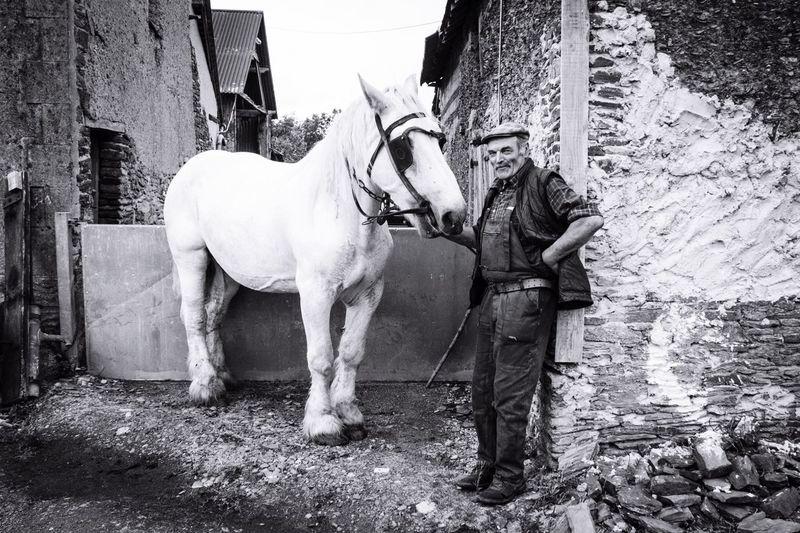 Horses Horse Countryside NEM Black&white Monochrome Blackandwhite NEM Submissions EyeEm Best Shots Eye4photography  EyeEm Nature Lover