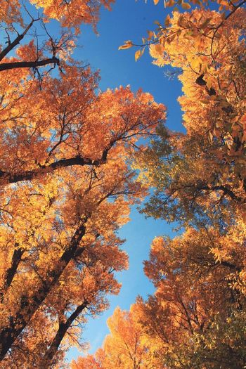 """""""Trees, oh trees... Do you remember me?"""" I Am Oak Late Fall Low Angle View Nature Growth Orange Color No People Sky Branch Tree Outdoors Beauty In Nature Autumn Change Nature Photography Scenics Tranquility Earth Experience Simple Things In Life"""