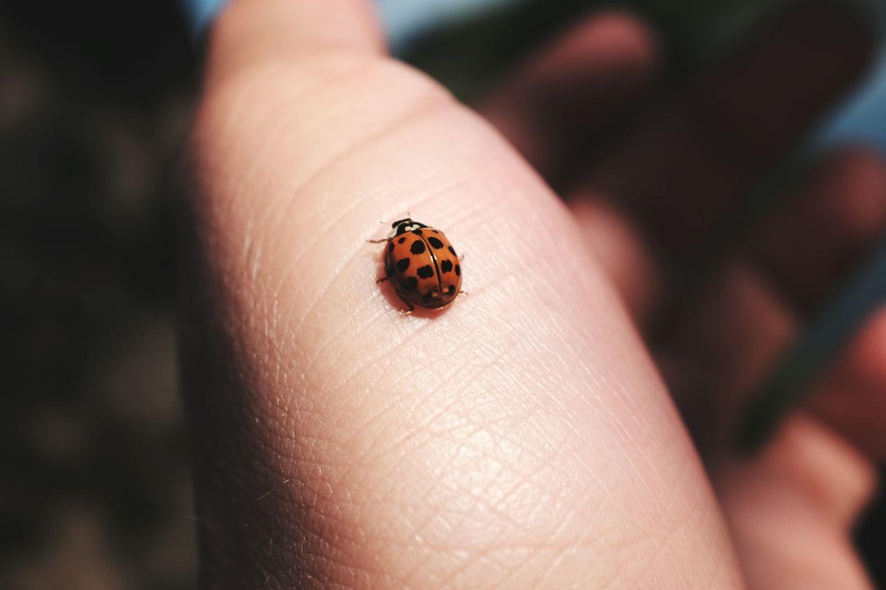 Close-up of ladybug on hand
