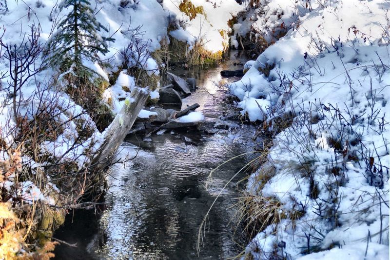 Foothills stream, un-frozen for now. Taking Photos Serene Late Autumn Ripples Water Ripples Cool Clear Water Foothills