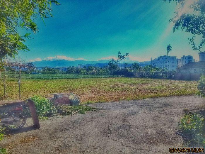 隨拍 Tree Sky Nature No People Beauty In Nature First Eyeem Photo