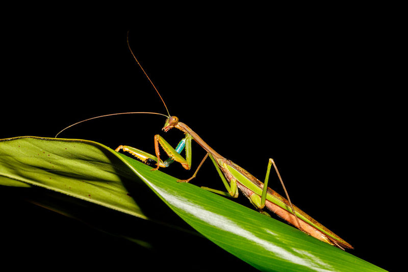 Close-up of praying mantis on leaf in forest