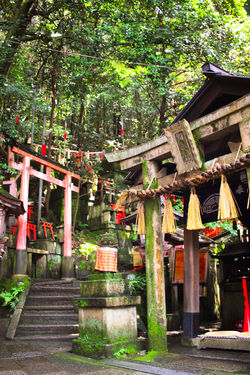 Architecture Backgrounds Building Exterior Built Structure Exploring EyeEm Best Shots Green Hanging Japan Japanese  Kyoto Landscape Lantern Nature No People Outdoors Photography Religion Shrine Spirituality Summer Tradition Travel Travel Destinations Tree