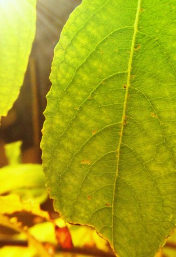 Nature Autumn Leaves Green Color Close-up First Eyeem Photo