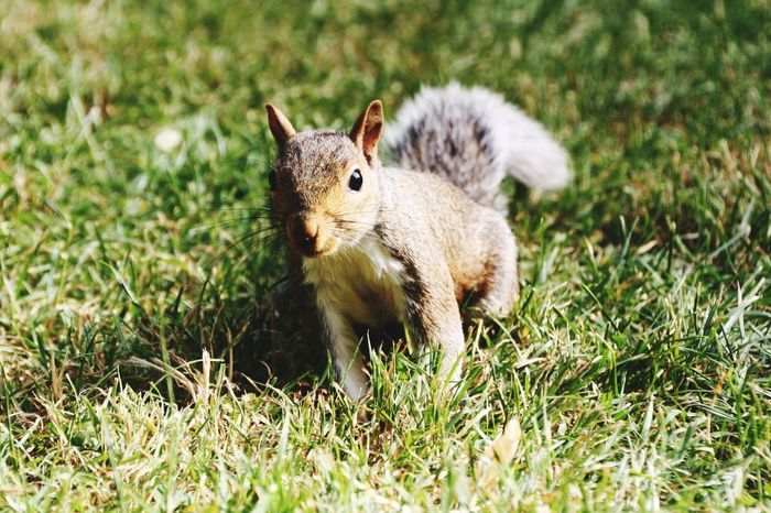 EyeEm Selects Grass Animal One Animal Mammal Animal Wildlife Animals In The Wild Cute Outdoors Nature Looking At Camera No People Day