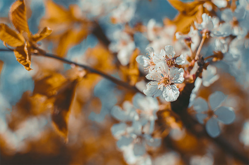 Almost Spring... EyeEm Best Shots EyeEm Nature Lover EyeEmNewHere Orange Teal Beauty In Nature Blossom Branch Close-up Day Eye4photography  First Eyeem Photo Flower Flower Head Focus On Foreground Fragility Freshness Growth Nature No People Outdoors Petal Selective Focus Springtime Tree