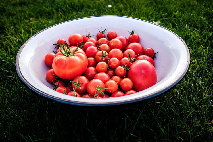 High angle view of strawberries in bowl on field