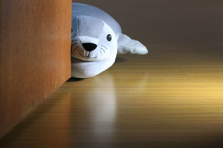 sea lion doll lying behind the door Isolated Light Reflection Textures Toys Animal Representation Beauty Childhood Close-up Cute Day Dolls Gifts Hardwood Floor Ideas Indoors  No People Portrait Sea Lion Doll Shadow Soft Grunge Stuffed Toy Texture Toy Wool Shades Of Winter