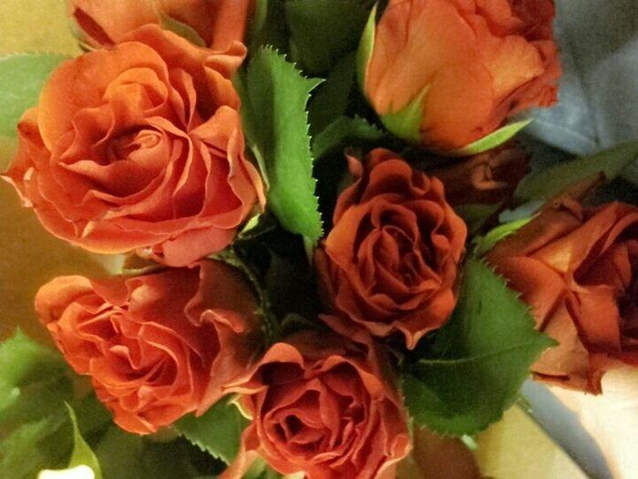 Blumen Flowers Relaxing Hi! Enjoying Life Hello World 😚 😚