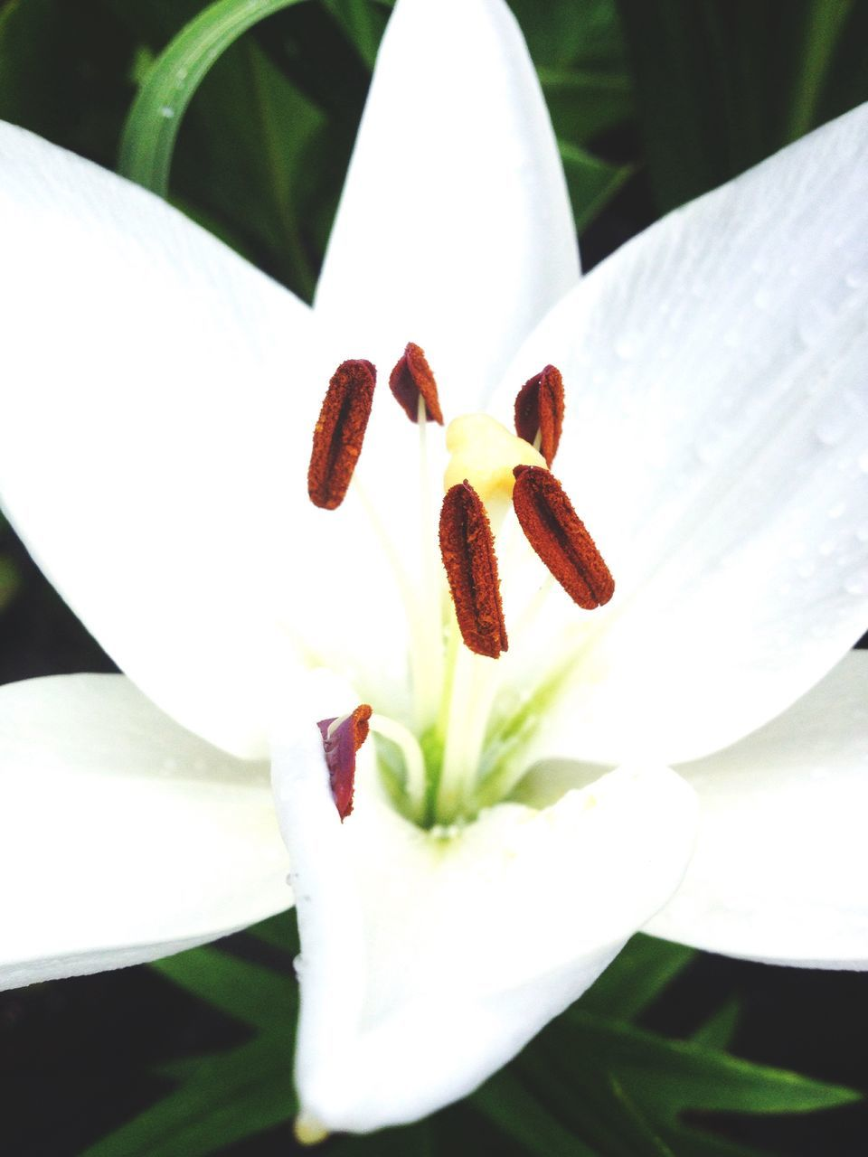 flower, petal, freshness, growth, white color, fragility, flower head, beauty in nature, nature, plant, day, stamen, close-up, outdoors, no people, blooming, springtime, leaf, day lily