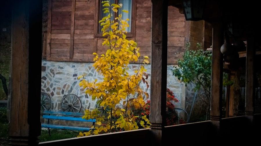 Oldhouse FromTheWindow NativeHouse Siniatvir Autumn Colors