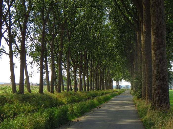 Dutch Landscape Holland Netherlands Vanishing Point Poplars Eye4photography  Green Canals And Waterways Road