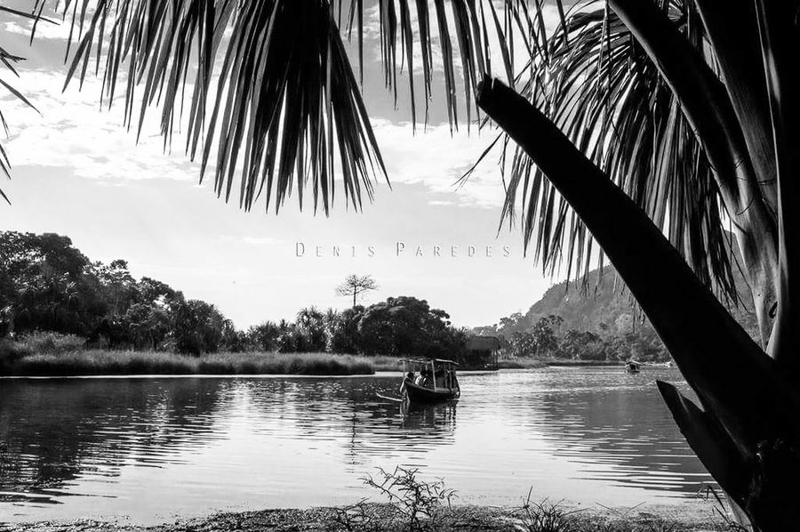 Telling a fairy tail 🐆🐒🐢 Hello World Tranquil Scene Enjoying Life Nature Landscape Peruvianjungle Beauty In Nature Landscape_photography Travel Photography Lagoon, Island, Port, Majestic Nature Bnw_captures Bnw Photography Peru Peru Traveling Tingo María