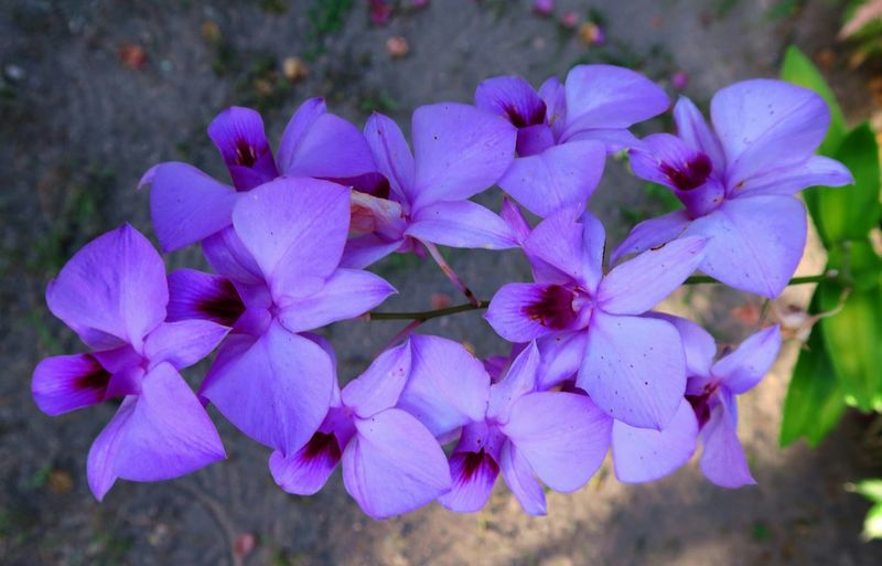 My Flowers Collection Lombok Photo Works Canon PowerShot G7X Indonesia_photography Showcase May