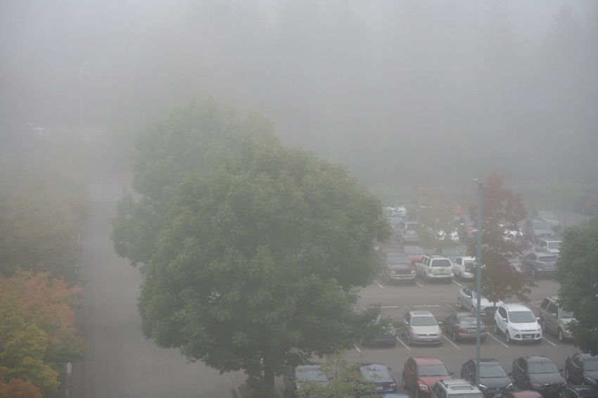 Beauty In Nature Car Day Fog Foggy Growth High Angle View Mode Of Transport Nature No People Road Scenics Sky Street Tranquil Scene Tranquility Transportation Tree Waterfront Weather