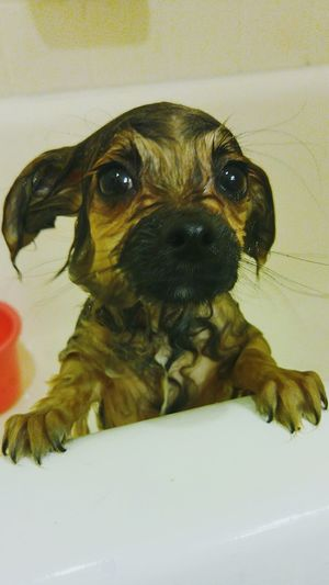Gremlin! Puppy Puppy Love Puppy Eyes Dog Love Dogs Of EyeEm