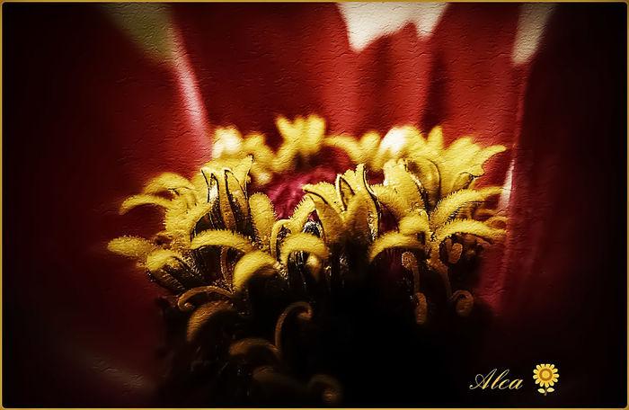 Greetings to Antje😘 Flower Zinnia  Nature Macro Photography Nature Photography Flower Head Fine Art Photography Ladyphotographerofthemonth Art Is Everywhere Outdoor Beauty EyeEm Best Shots - Nature Garden Flowers Garden Photography EyeEm Nature Lover Beauty In Nature Garden Love Garden Flower Zinnia Detail Macro Zinnia Detail Zinniaflower Zinnia Plant Nature Macro_collection Nature_collection Summer 2017 EyeEm Selects Greetings To Friends