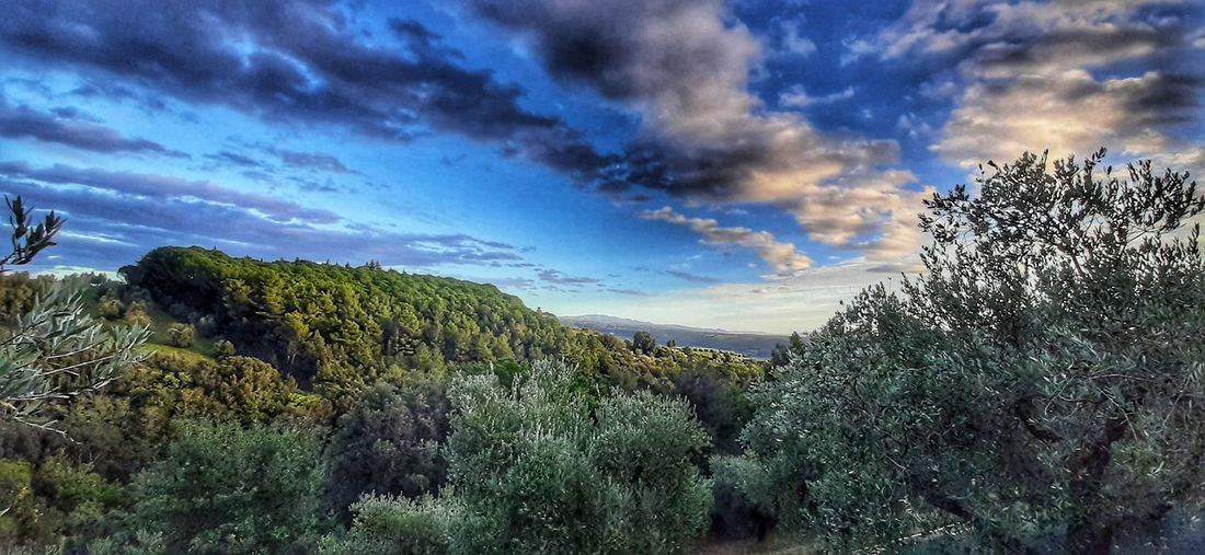 Panoramic view of trees growing in forest against sky