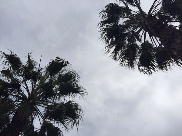 LA Love❤️ Taking Photos Hello World Enjoying Life Double Agent Usa Los Ángeles Venice Beach